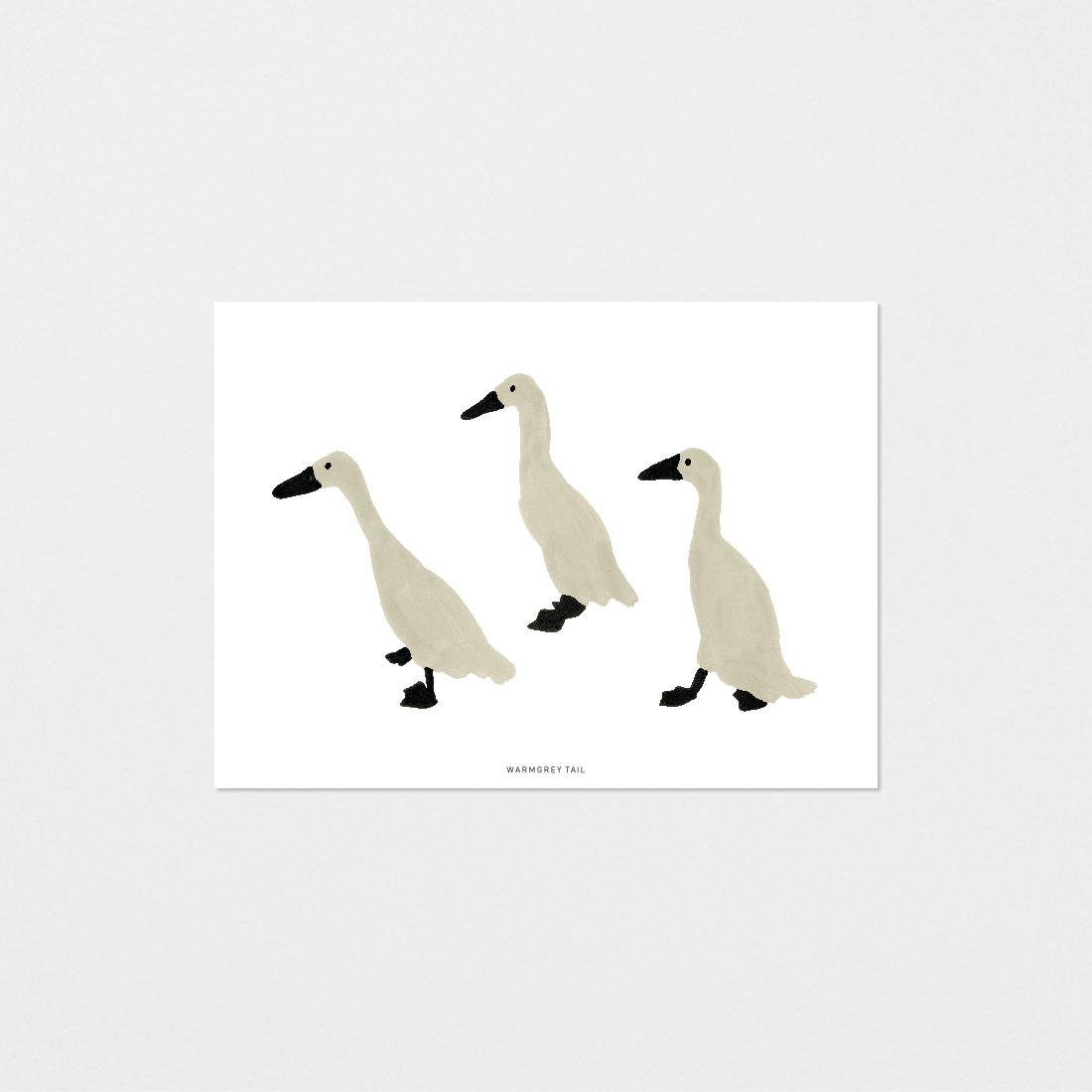 INDIAN RUNNER DUCK POSTCARD